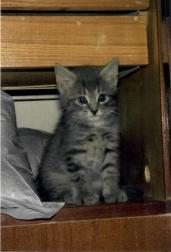 Kitten Aelita, 1995, St. Petersburg.jpg